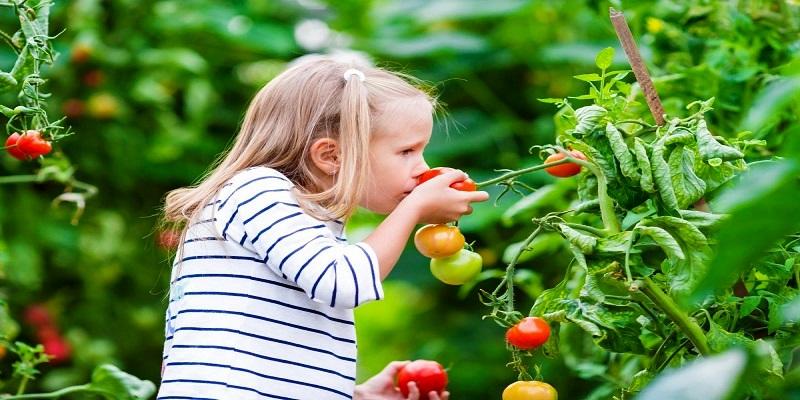 girl-tomatoes-shutterstock_440076301_0